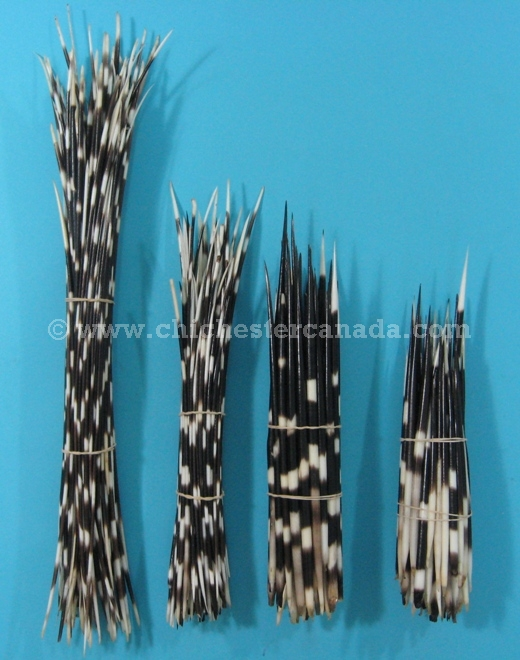 African Porcupine Quills and Long Porcupine Quills or Porcupine ...