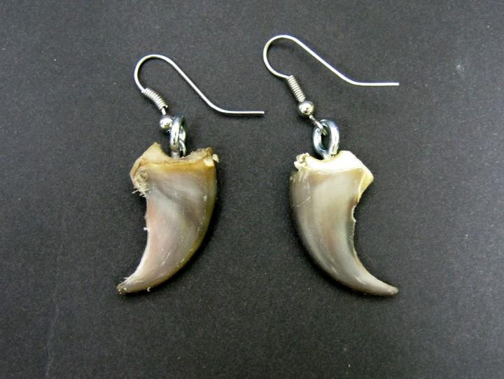 Coyote Claw Earrings